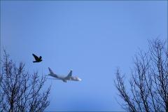 Flugzeug und Vogel