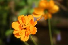 Sommerblumen im Juli