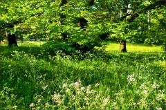 Wildwiese im Mai