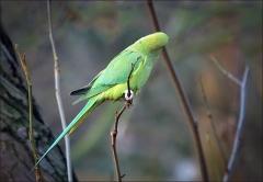 Papagei im Dezember