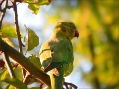 Papagei im September