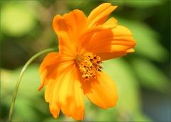 Blume im Juli