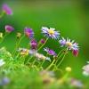 Sommerbluemchen mit Morgentau