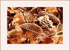 Blätter an einem frostigen Morgen