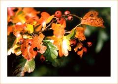 Die Farben des goldenen Oktober