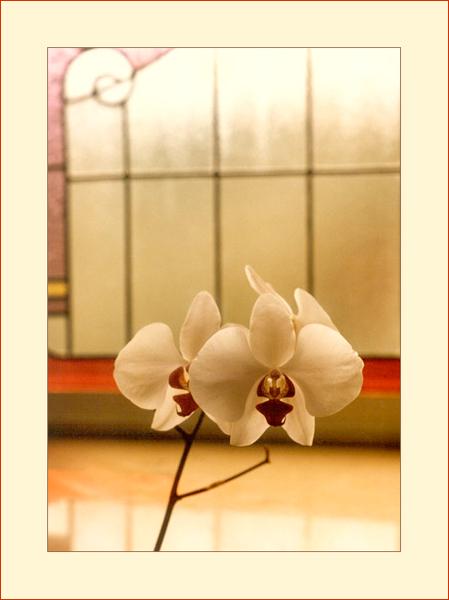 Eine Orchidee
