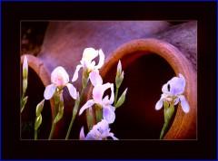 Lilien vor alten Ölkrügen