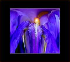 Abstrahierte blaue Blüte