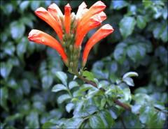 Interessante Blüte
