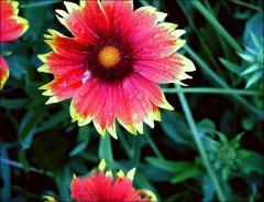 Blütenimpression