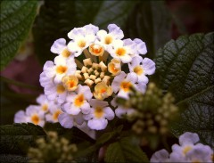 Kleine Blüte