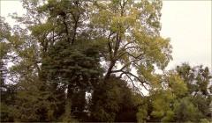 Romantische Bäume