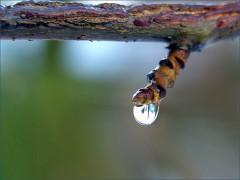 Ein Regentropfen