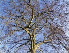 Ein prächtiger Baum