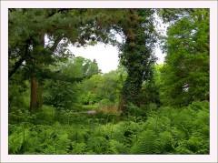 Kleiner Waldteich
