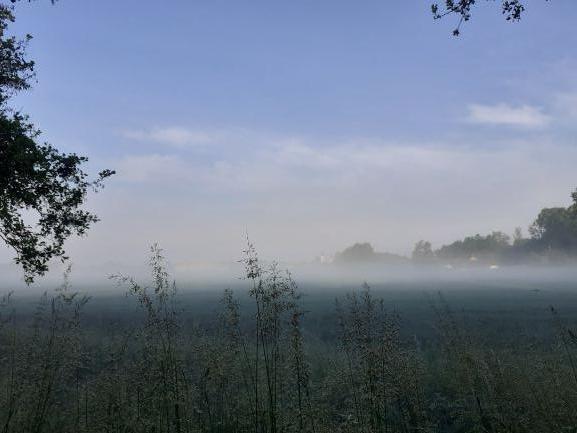Nebel In Der Au