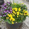 Blumentopf am trotoar