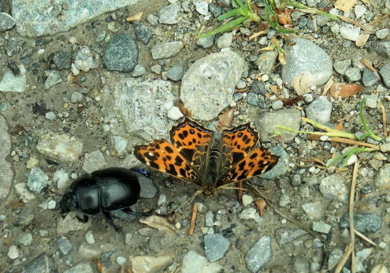 Schmetterling und Käfer