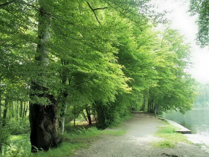 Juni Grün