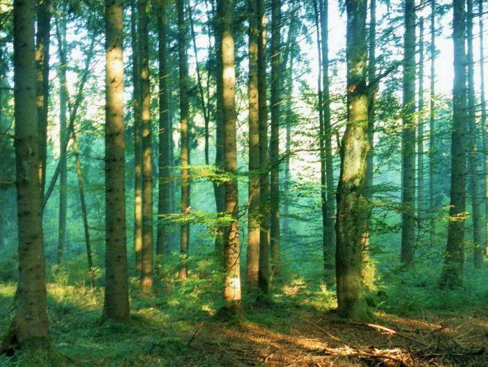Wald im Oktober