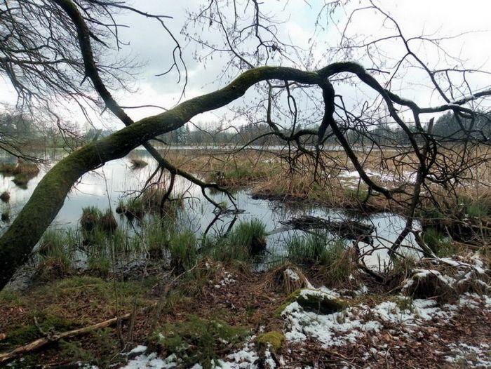 Teich im April