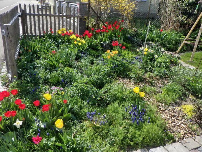 Vorgarten im Frühling