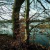 Bäume am Ufer
