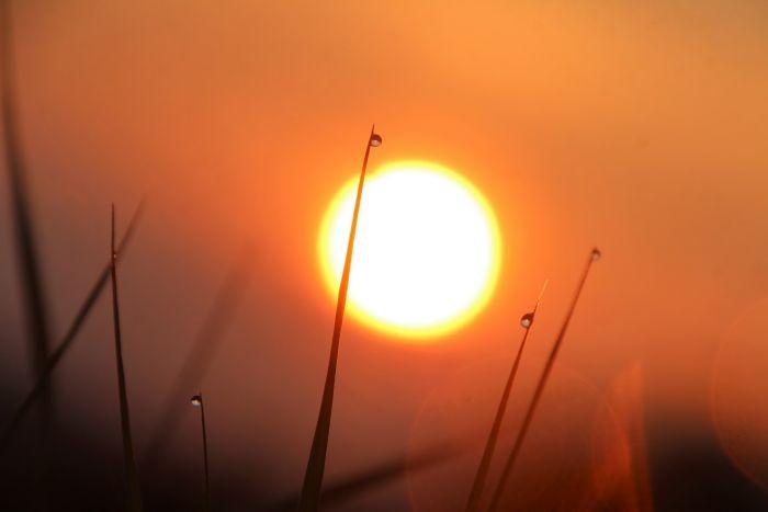 Morgentau und Sonne