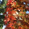 Blätter und Baum