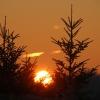 Bäume bei Morgensonne