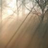 Waldstimmung