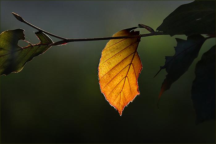 Herbstblatt im Oktober
