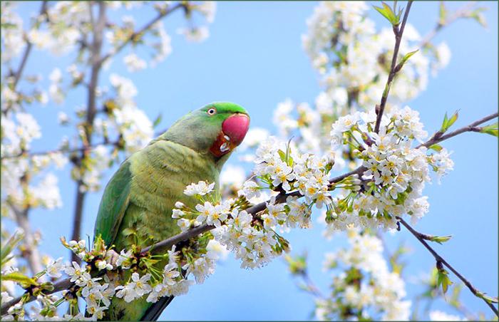 Papagei futtert Blüten