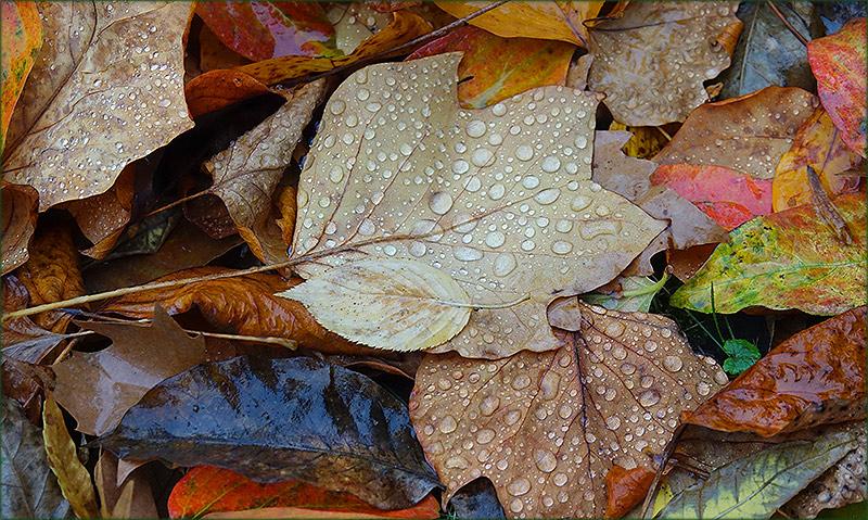 Blätter mit Regentropfen