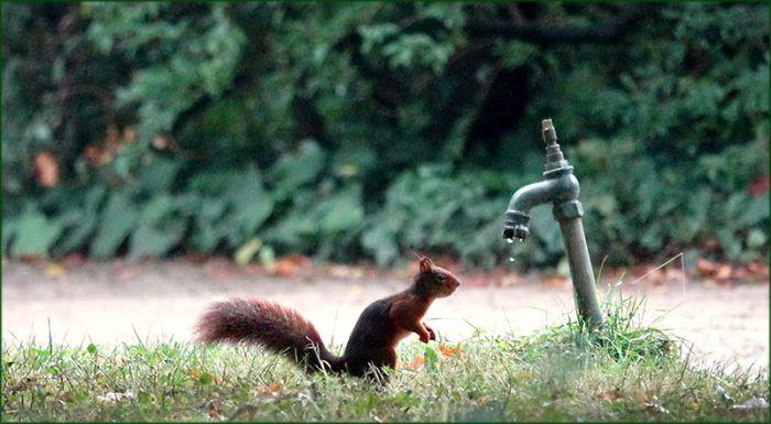 Das Eichhörnchen beobachtet fallende Wassertropfen