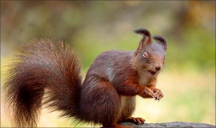 Mir zuzwinkerndes Eichhörnchen
