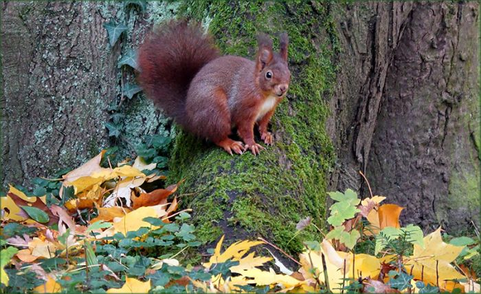 Eichhörnchen im November