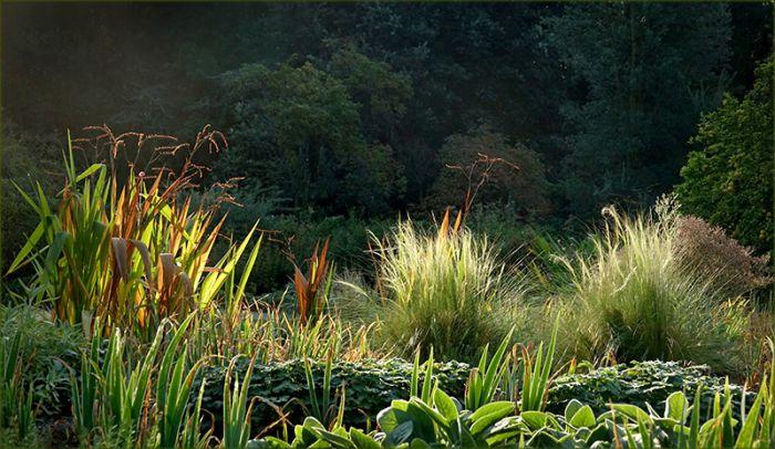 Gräser in der Morgensonne