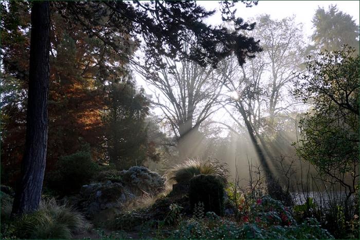 Morgennebel im November