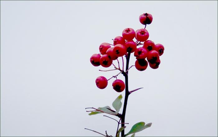 Beeren im Februar