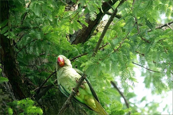 Papagei im Juli