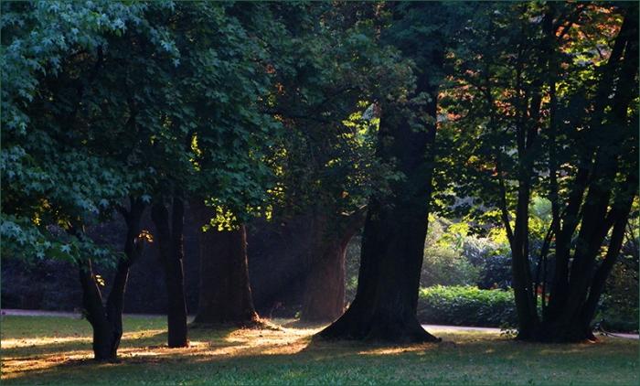 Morgensonne zwischen Bäumen