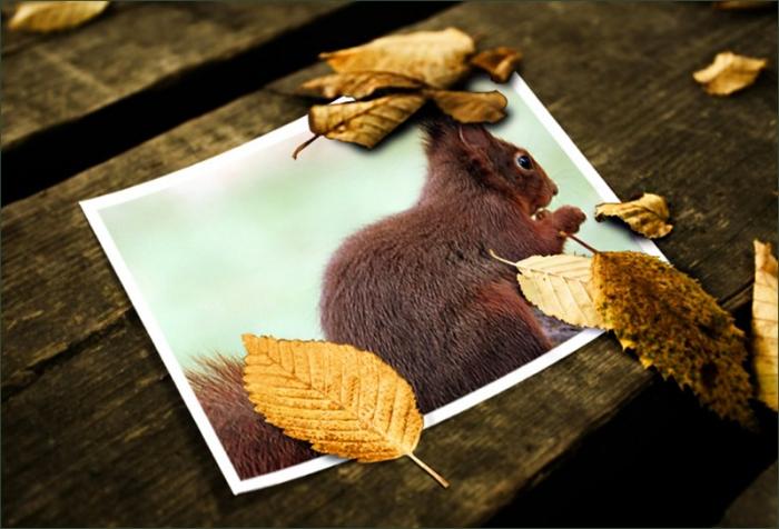 Eichhörnchenfoto