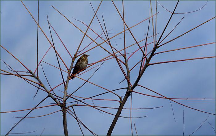 Vogel im Dezember