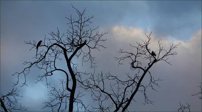 Baumzweige im Januar