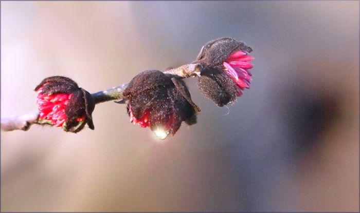 Kleine Baumblüten im Februar