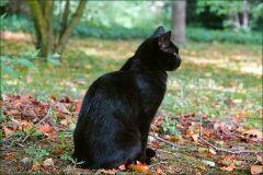 Katze im Herbstlaub