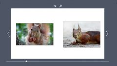 Meine Eichhörnchenfotos als eBookalbum