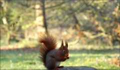 Eichhörnchen im Februar