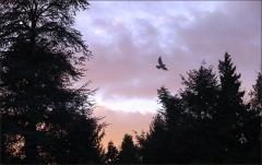 Waldrand vor Sonnenaufgang